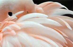 vanit 224 in rosa