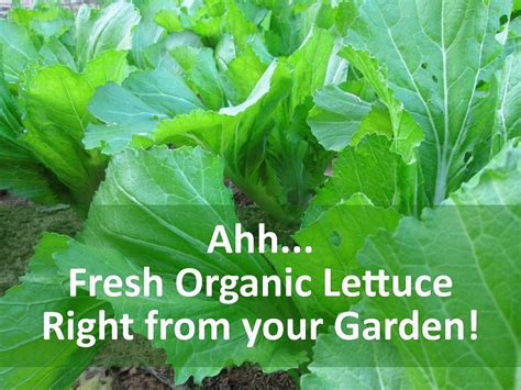 what should i grow in my vegetable garden what to grow in your vegetable garden institute