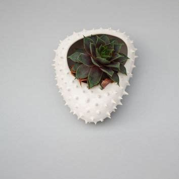 White Ceramic Wall Planter by Shop White Wall Planter On Wanelo