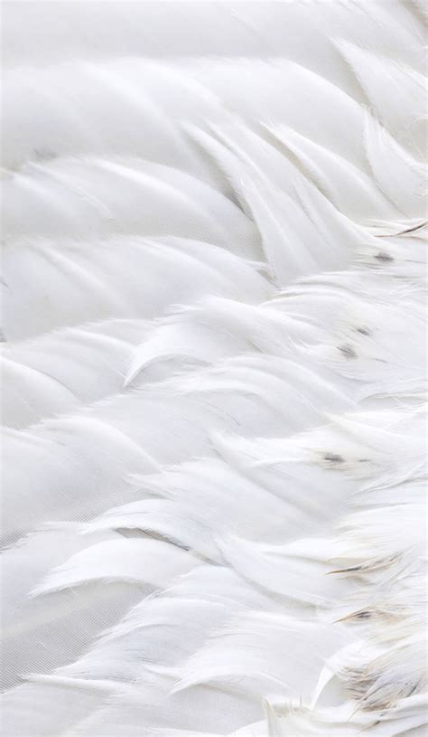 White Free - 25 best ideas about white feathers on feather