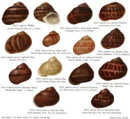 fidgety fingers which garden snail is edible