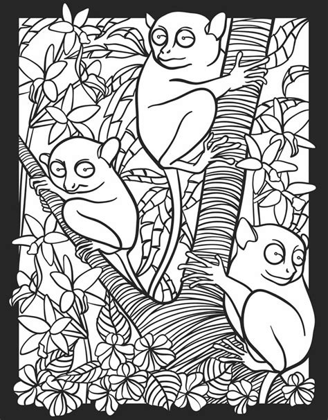 Nocturnal Animal Free Coloring Pages Nocturnal Animal Coloring Pages