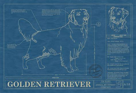 golden retriever blueprint golden retriever animal blueprint company