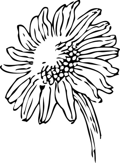 black and white sunflower clipart clipart panda free