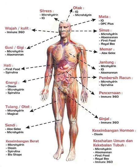 struktus  sistem organ tubuh manusia gudang ilmu