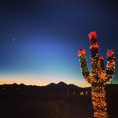 foap com desert christmas a saguaro cactus decorated