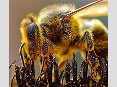 NASA Climate Kids :: A Bee is More than a Bug Royal Jelly