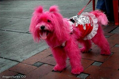 pink puppy pink pictures