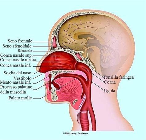 mal di testa sangue dal naso dolore al naso cause e rimedi