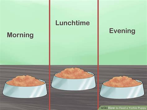 how much to feed a yorkie puppy how to feed a yorkie puppy 11 steps with pictures wikihow
