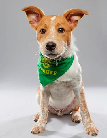 puppy bowl 2017 adoption pup from hamilton rescue in 2017 puppy bowl wcpo cincinnati oh