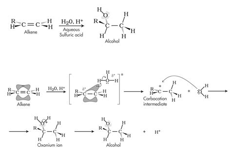 hydration alkene organic chemistry reaction mechanisms for the mcat