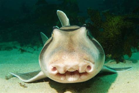 requin dormeur le requin dormeur de jackson curiosit 233 s de titam