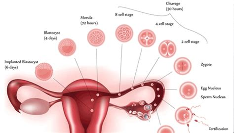 Spotting Vs Light Period by What S The Difference Between Implantation Bleeding And