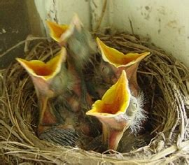 what can a bird do what do baby birds eat what do birds eat
