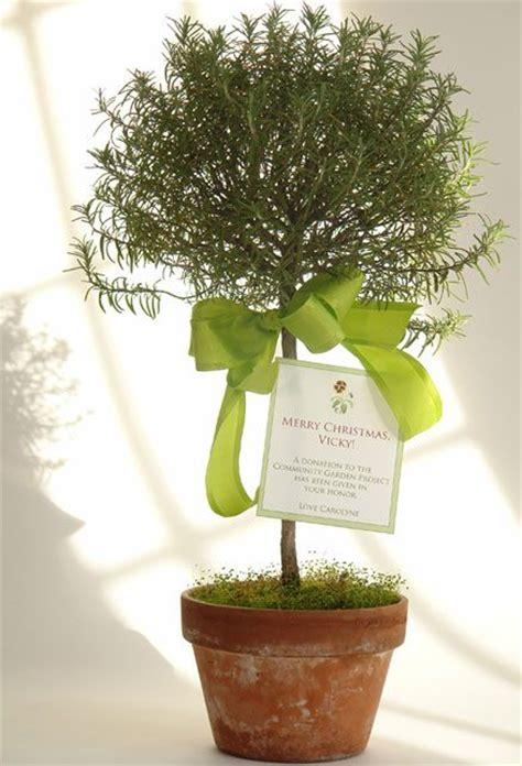 herb topiary gift idea - Herb Topiaries