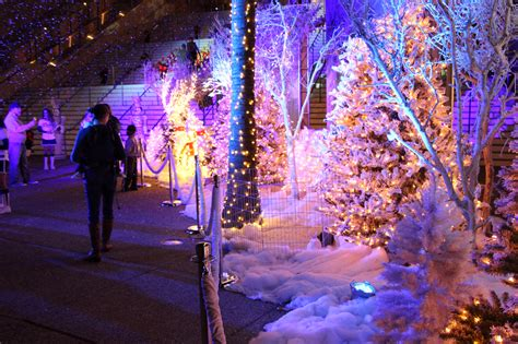 zootastic park christmas wonderland lights 2015 san diego holiday events holiday wonderland petco