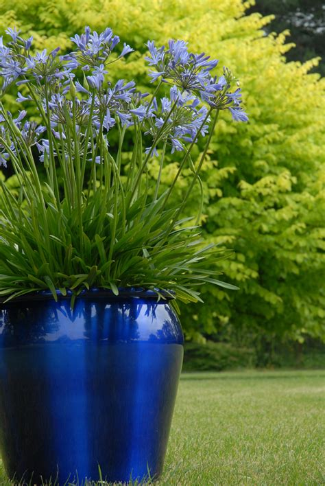 tesselaar plants helps rev   outdoor living
