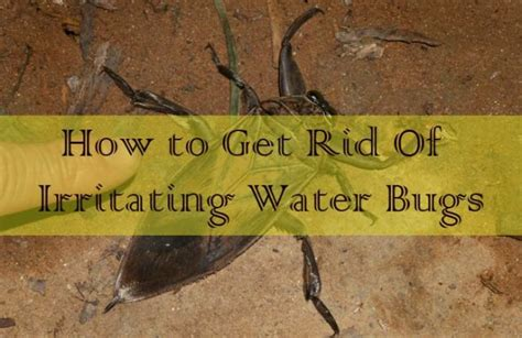 how to get rid of water bugs in bathroom 17 effective household remedies to get rid of irritating water bugs