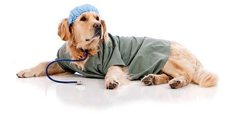 imagenes de medicas veterinarias patinhas com medicina veterin 193 ria
