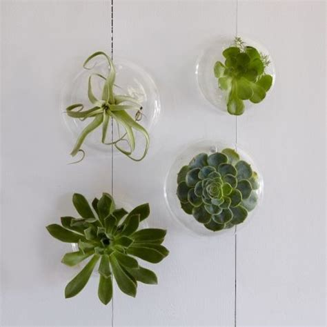 Glass Planters by Shane Powers Glass Wall Planters Indoor