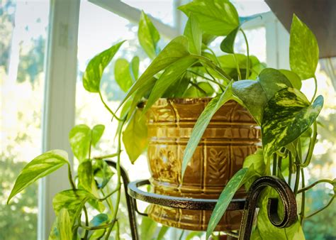 houseplant guide   care  indoor plants