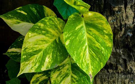 plantas de interior poca luz 4 plantas de interior que necesitan poca luz fundaci 243