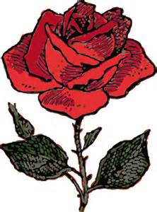 red outline flower cartoon love rose rosa free