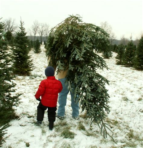 christmas tree farms in pasco county fl