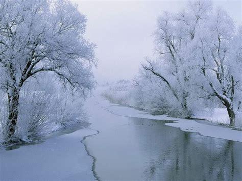 imagenes de arboles invierno 1000 images about 225 rboles blancos y paisajes invierno on