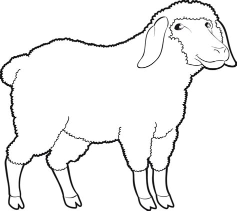 Coloriage Un Mouton Dory Fr Coloriages