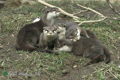 a pile of otter pups at the exmoor zoo zooborns