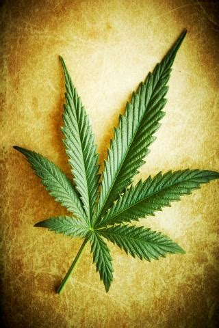 android wallpaper weed weed wallpapers for android mobile styles