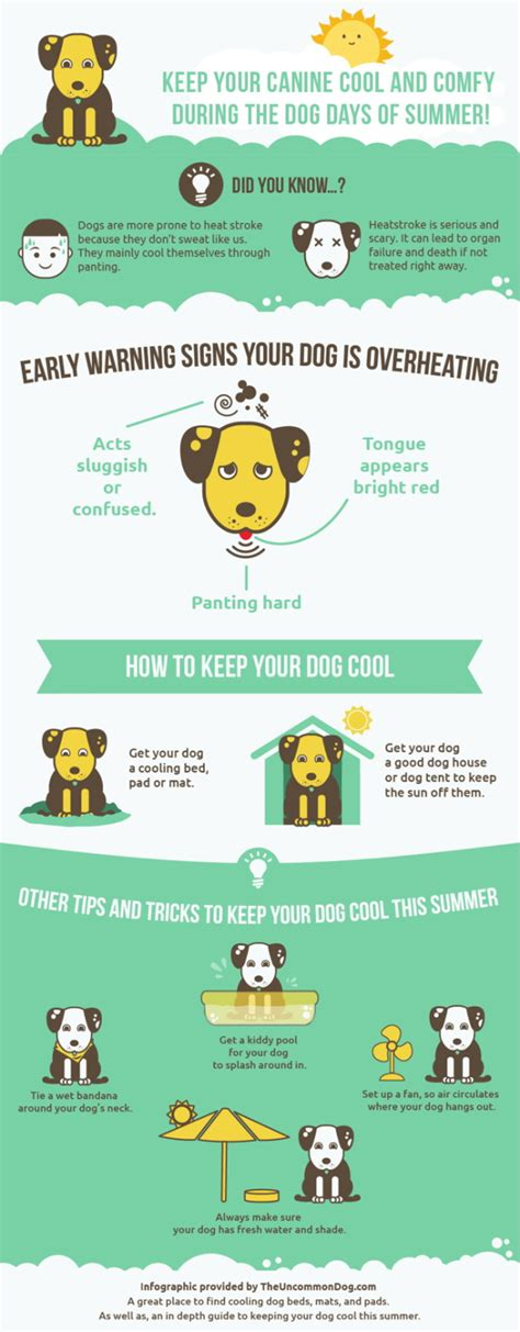 how to keep dogs cool in summer how to keep your cool in summer