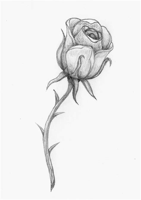 a rose by any other name by balloon fiasco on deviantart