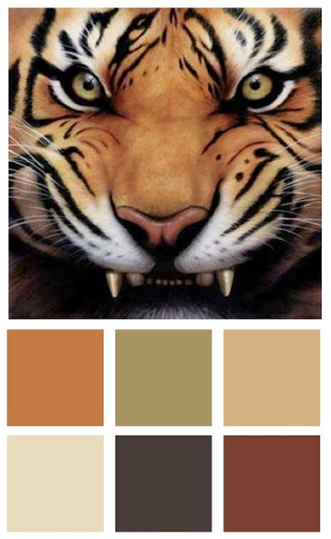 tiger color a color specialist in savage color for your home