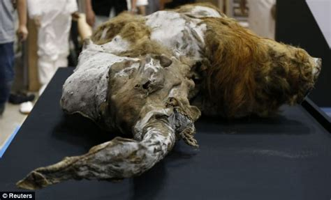 How To Bring A Dead Plant Back To Life woolly mammoth found frozen in siberia after 39 000 years