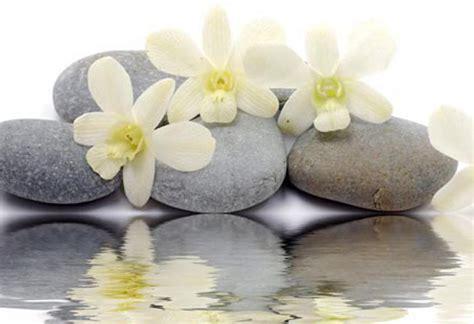 flower zen wallpaper hd wallpapers zen stones reflecting white flowers new