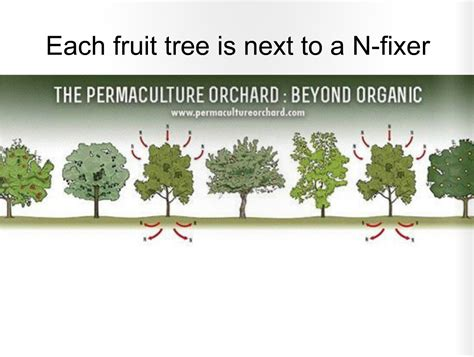 fruit tree orchard layout here is how you make a living from a 4 acre permaculture