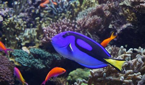 finding dory no 1 at july 4th box office tarzan what finding dory teaches us about memory loss asian