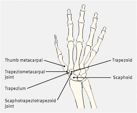 bone joint diagram diagram of the bones of the and carpus showing the