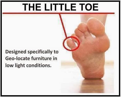 Toe Memes - all hat no cattle trump s iq test results are in