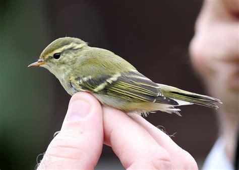 liste oiseaux des jardins