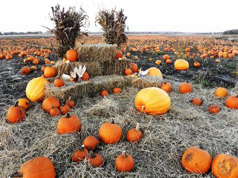 Pumpkin Patch Gift Card - pumpkin patch pahl s market apple valley mn