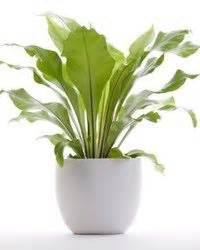indoor plants no sun dress up your home with these indoor plants that don t