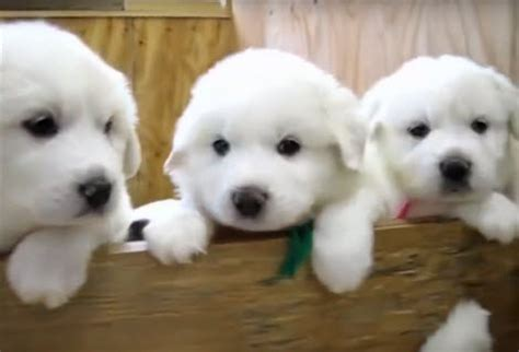 top ten cutest puppies the top 10 cutest puppy gt