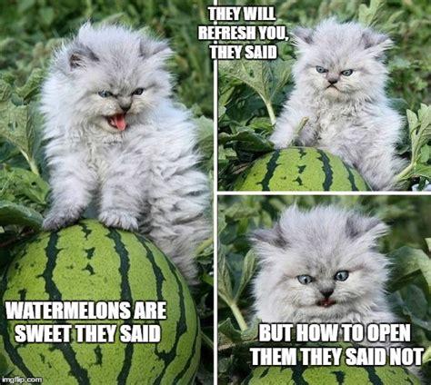 Annoyed Cat Meme - angry cat imgflip