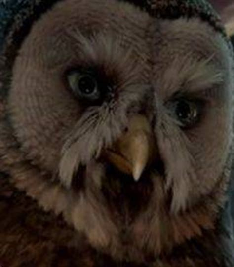 who is the voice of the owl on the eyeglasses commercials voice of allomere legend of the guardians the owls of