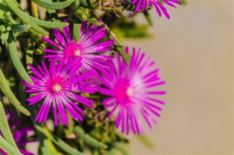 piante ricanti con fiori viola ste artistiche quadri e poster con fiori petali