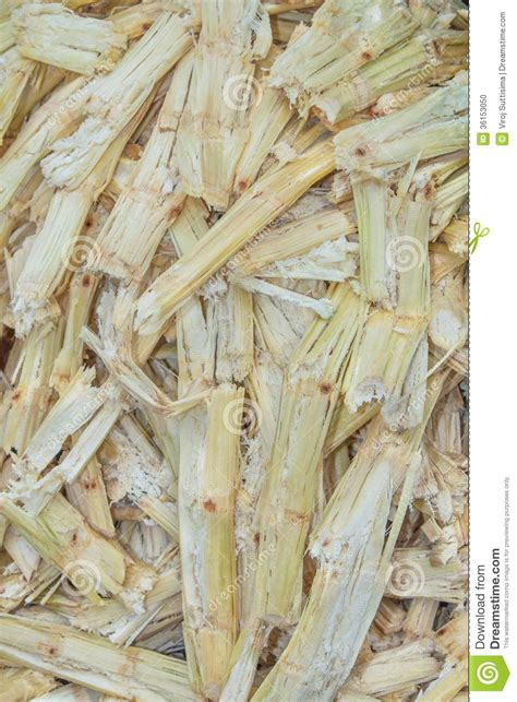 How To Make Paper From Sugarcane Waste - sugarcane bagasse stock photo image 36153050
